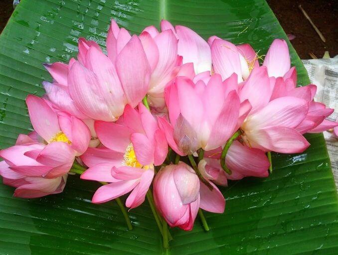 pooja flowers benefits in tamil